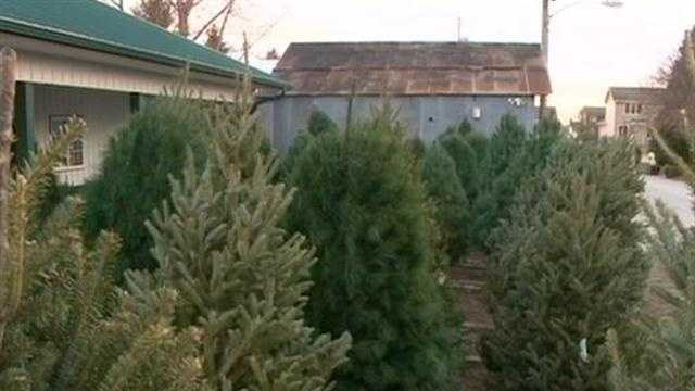 Iowa Christmas Trees For Soldiers