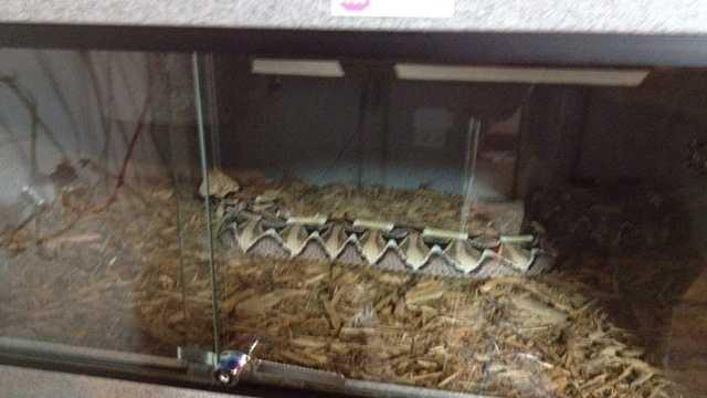 Snakes omaha