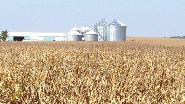 Iowa farm field fall corn harvest