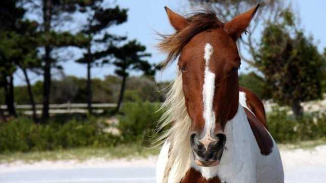 Horse at Assateague Island State Park