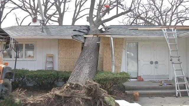 KCRG tree house