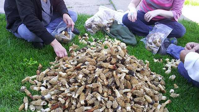 mushroomnew1_brooktim.jpg