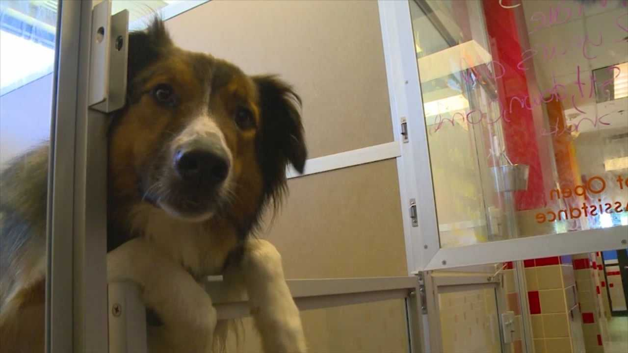Dognapping cases reported