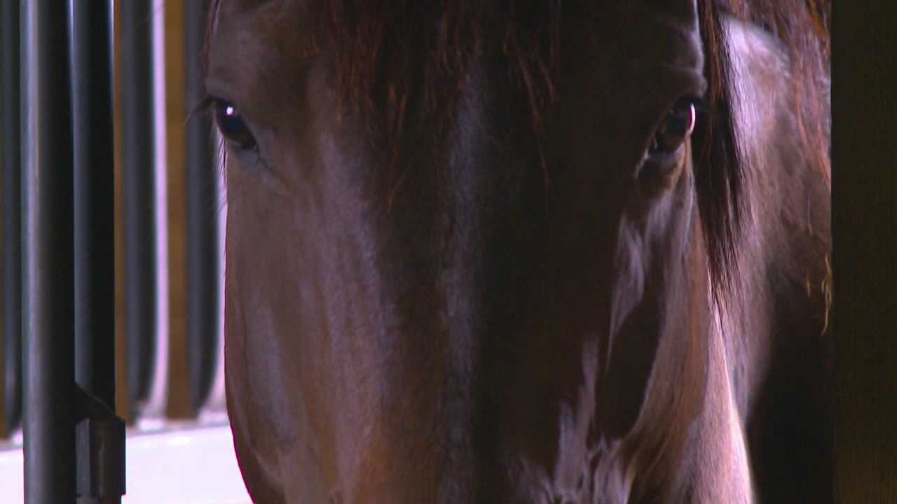 img-Many Iowans opposed to horse slaughter plant