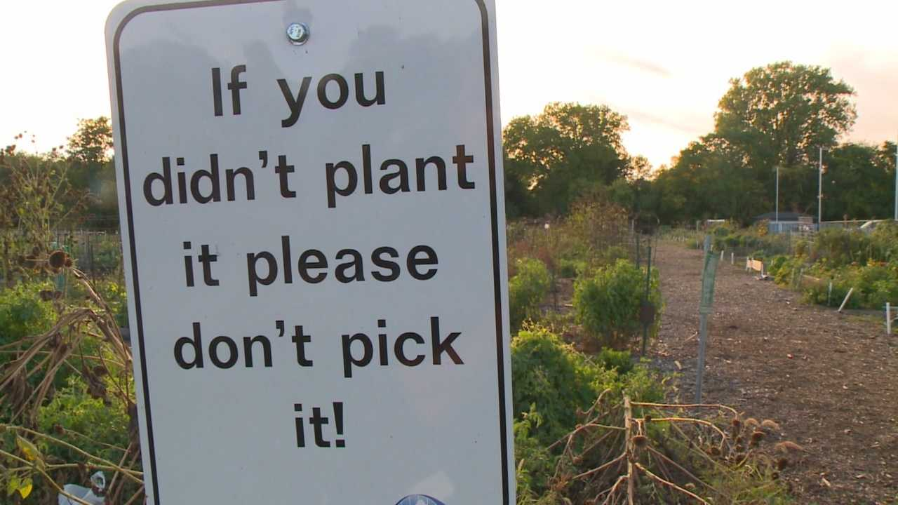 This summer, there's been a nuisance in the community garden that has nothing to do with mother nature.
