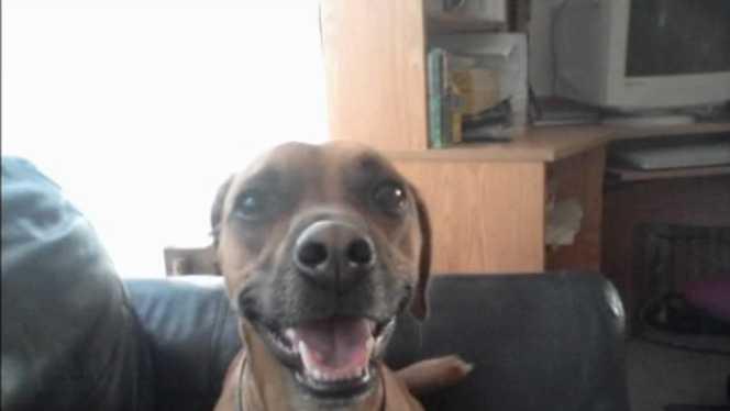 KCRG Dog