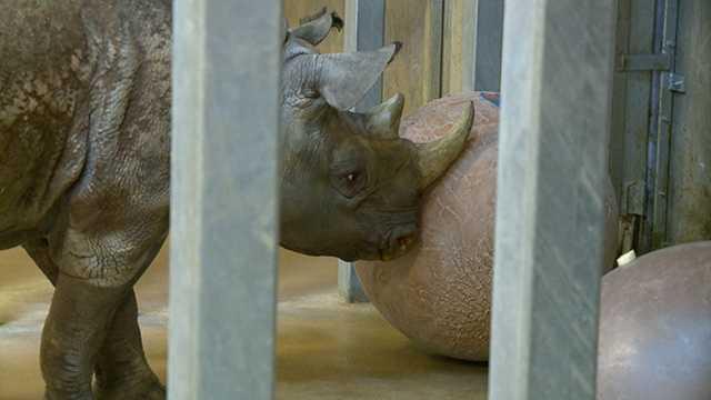 Rhino picks Super Bowl
