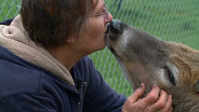 JoAnne Milby has been saving animals for 25 years