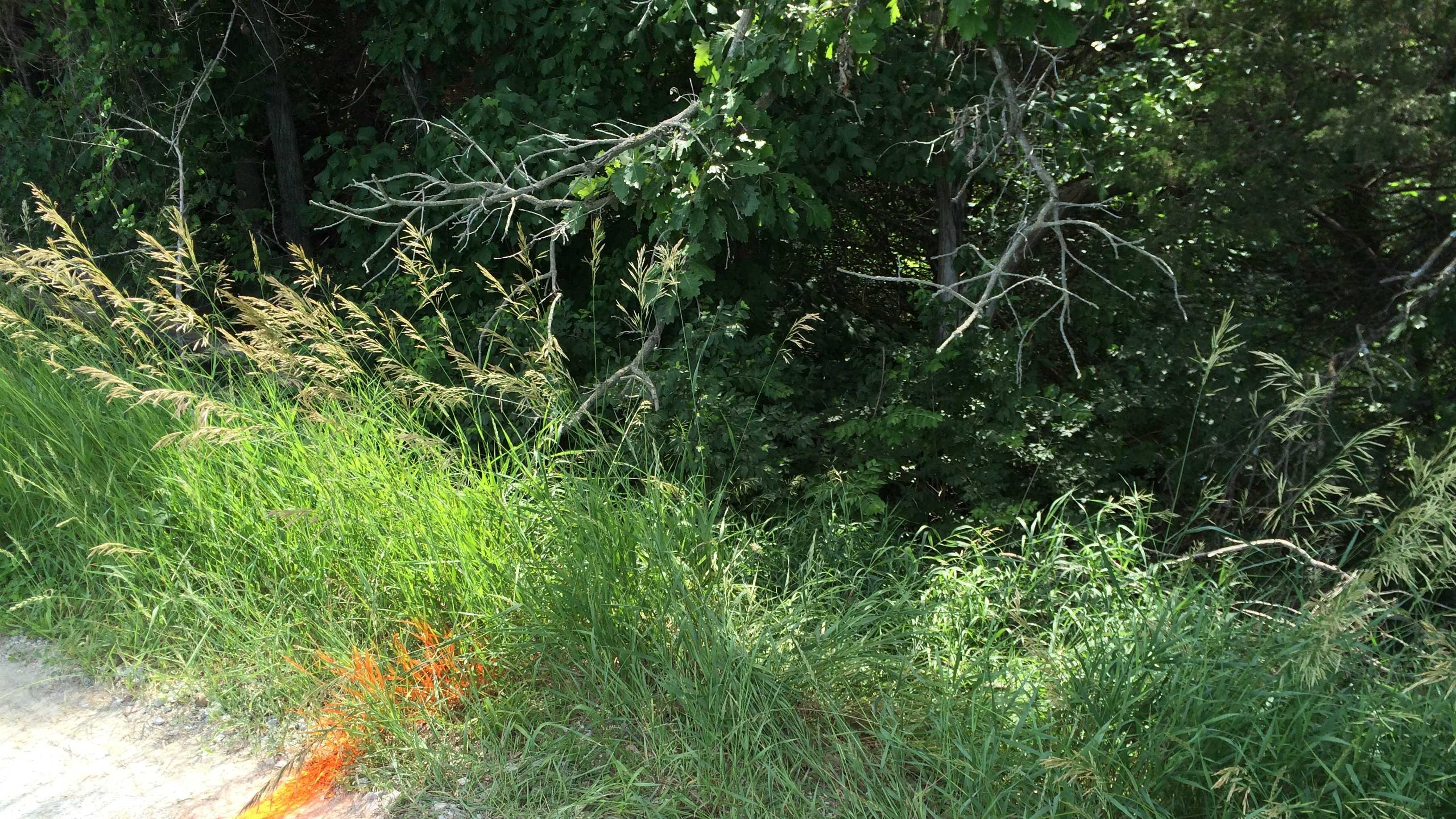 dallas co toddler ditch photo 1