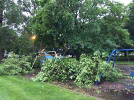 Trees down in Randall, Iowa.