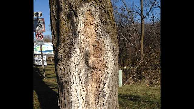 Tree trunk Mother Mary, Jesus