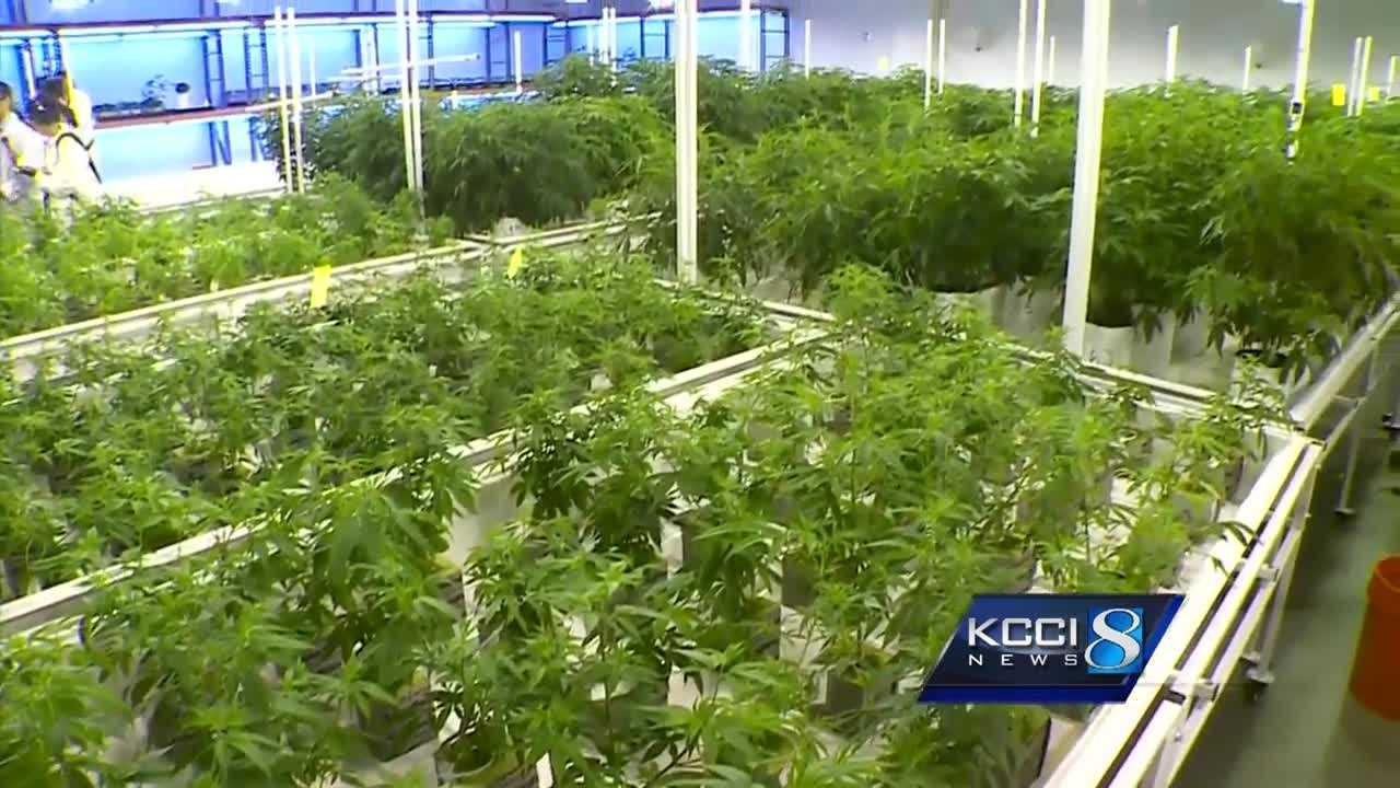 Republican to sponsor medical marijuana bill