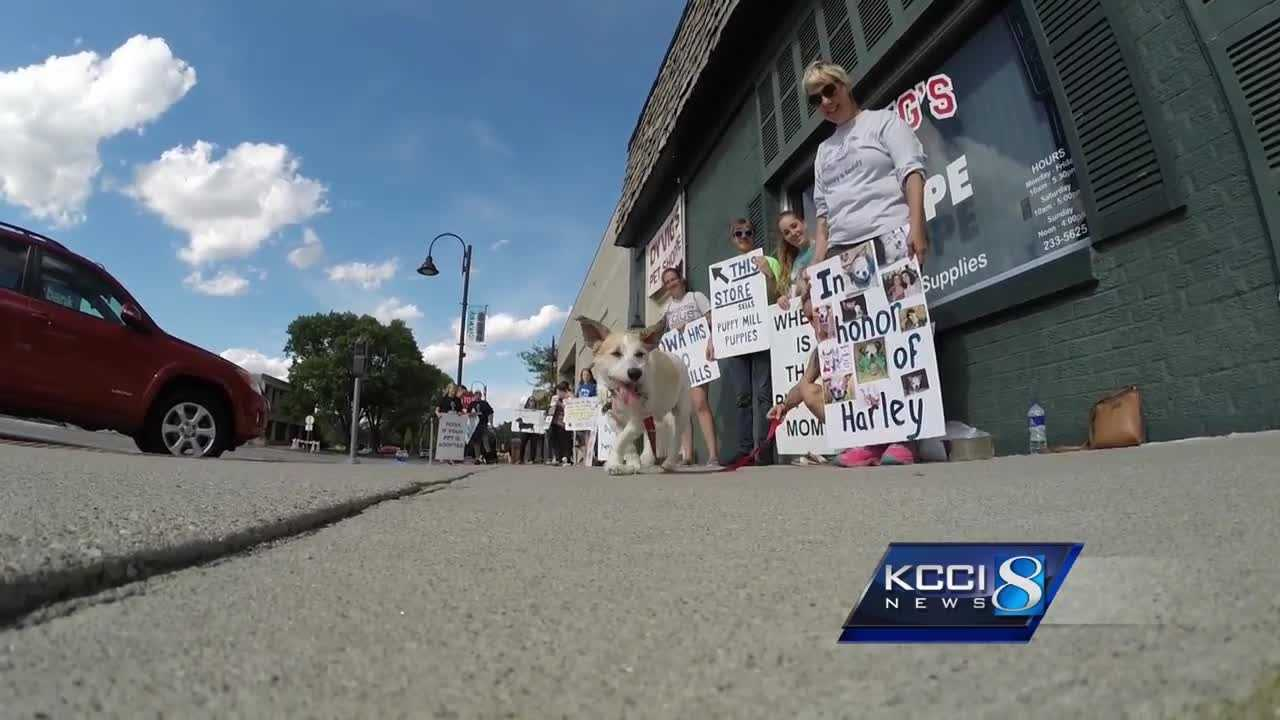 Puppy Mill protesters hope to educate reputable dog owners
