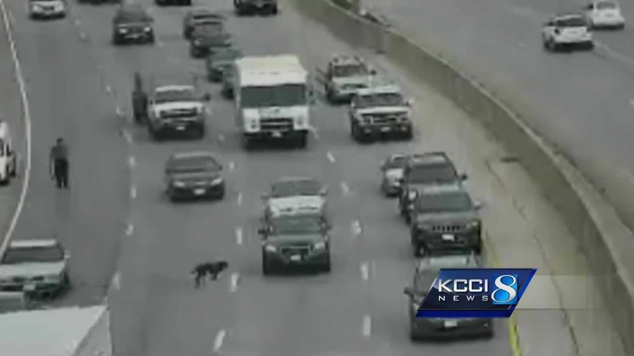 A happy update for dog seen running on I-235