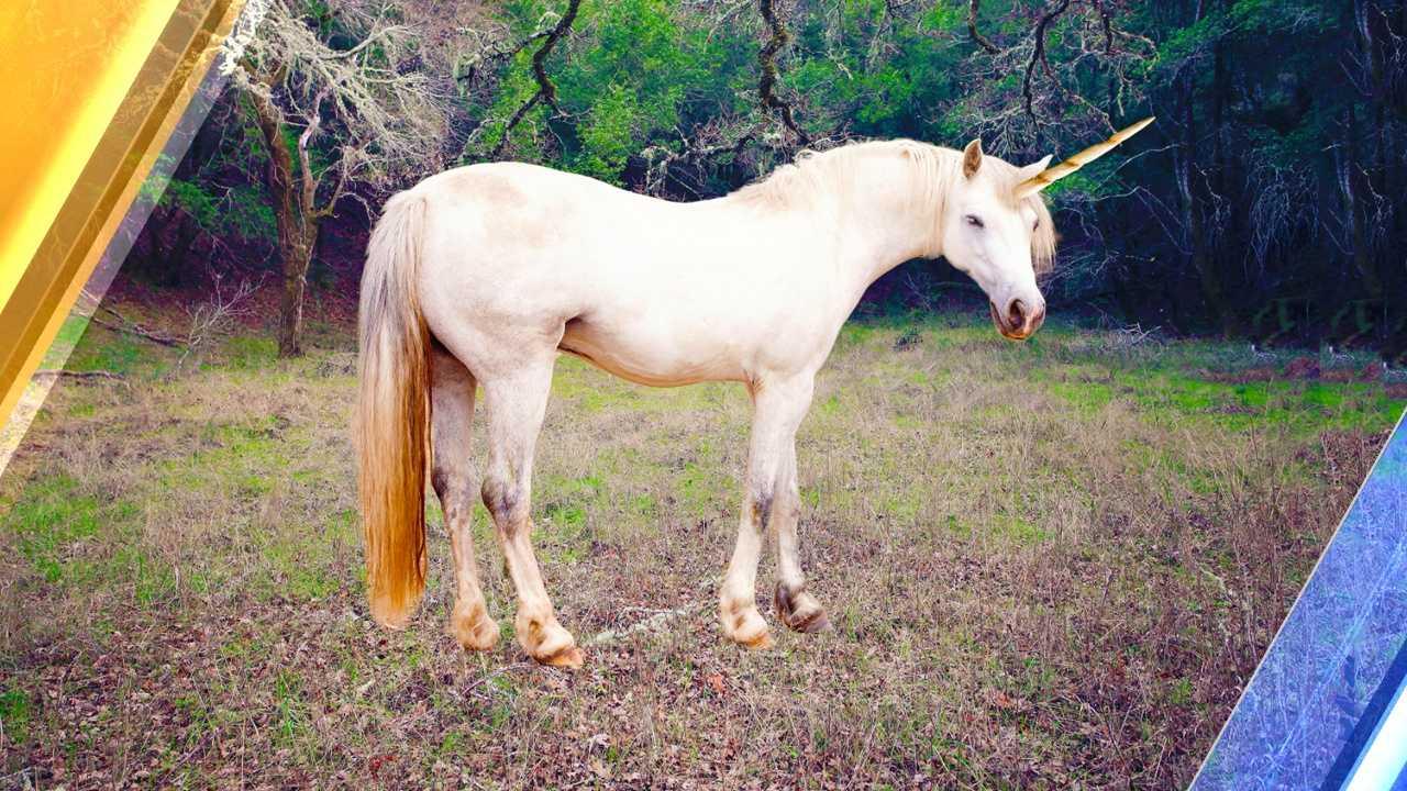 _unicorn_0060.jpg