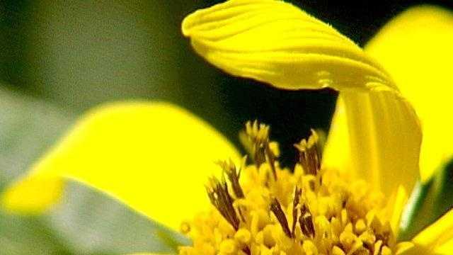 Flower cu summer iowa spring - 17322439