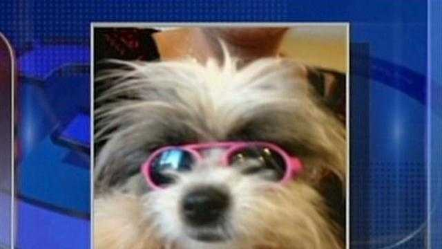 Owners say dog killed at groomers