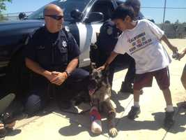 Bodie, the Sacramento police dog that was injured while on duty, made an appearance Monday during a children's camp in Natomas.