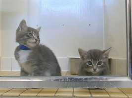 Cats (Tuesday) - The city of Elk Grove works to fight an increase in stray and feral, or poorly socialized, cats.At a workshop Tuesday, the city's Animal Control department made suggestions about how to deal with the problem without euthanasia.