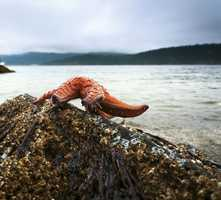 San Juan Island lures visitors with its rocky beaches, grassy meadows and peaceful harbors&#x3B; it also is home to Friday Harbor, a historic seaport and busy town.