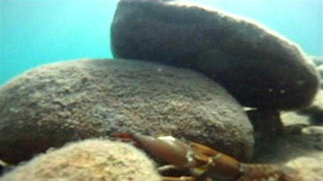 Fishing for crawfish in Lake Tahoe