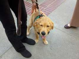 A statewide board for guide dogs announced a partnership with the California Restaurant Association that aims to educate restaurant staff about laws and etiquette when it comes to dogs and their owners.