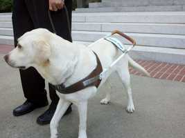 Guide dog teams and puppies being trained were at the state Capitol Monday.