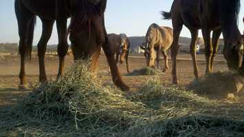 The Grace Foundation has begun accepting donated hay.