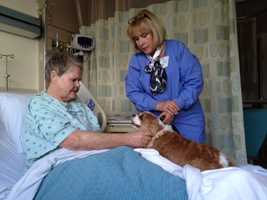 """Service dogs and their handlers of Sutter Memorial Medical Center's """"Paws on Call"""" therapy program provide many hours of comfort to patients at both Sutter hospitals."""