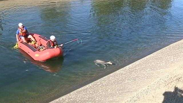 Firefighters rescue deer from canal