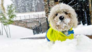 Marsh Mellow, who was abandoned at Northstar over the summer, plays in some snow for the first time. Marsh Mellow has since been adopted.
