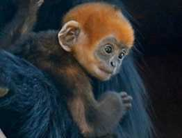 A baby Francois' langur monkey born at the San Francisco Zoo last month that some believe brought the Giants luck in their World Series bid has been named after relief pitcher Sergio Romo.