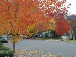Check out these photos from the Curtis Park neighborhood Tuesday that show trees turningyellow, red and orange.
