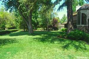 The backyard features a few trees.