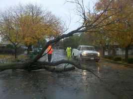 FridayAn ash tree fell across Scotts Avenue on Friday morning in Stockton (Nov. 30, 2012).