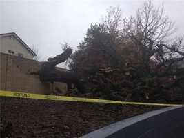 SundayThis old tree, loved by neighbors, came crashing down into the Heritage Park Apartments in Roseville on Sunday (Dec. 2, 2012).