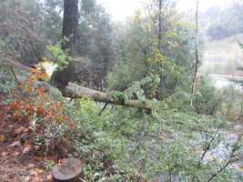SundayCaltrans was able to clear up the mess while neighborshelpedby chopping the tree.