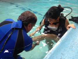 Dolphin SCUBA offers beginner-level to advanced diver classes.