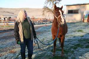 The Grace Foundation, a horse rescue group, is hoping to reopen its door in February. After the non-profit was forced to close, it now hopes to raise $50,000 to resume some operations. The foundation continues to care for more than 250 therapy horses at the ranch.