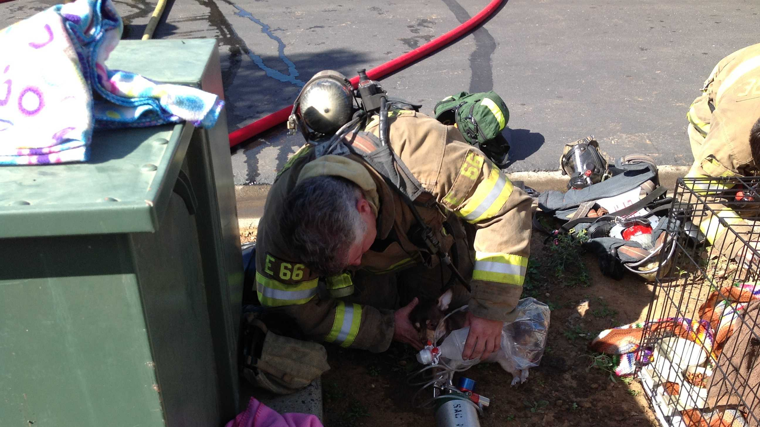 Firefighters saved two dogs from a burning mobile home.