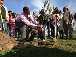Mayor Kevin Johnson got his hands dirty Thursday helping to plant a tree at Pacific Elementary School in Sacramento County's Parkway Area.
