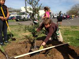 The Sacramento Municipal Utilities District donated a variety of tree species.