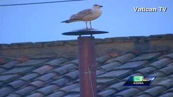 A seagull awaits the vote and created a bit of a stir by perching on the chimney of the Sistine Chapel in Vatican City