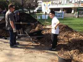 Student volunteers spread organic compost and mulch around plant beds and trees on Thursday.