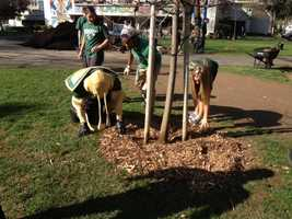 Sacramento State's Sustainability Team co-hosted Mulching Mania on campus with the Sacramento Tree Foundation on Thursday.