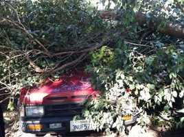 A KCRA Insider sent in this photo of a tree that fell down on a truck in Sacramento.
