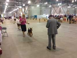 Professionals and dog lovers alike will be all eyes and ears Thursday during opening day of the Sacramento Kennel Club's dog show at Cal Expo.