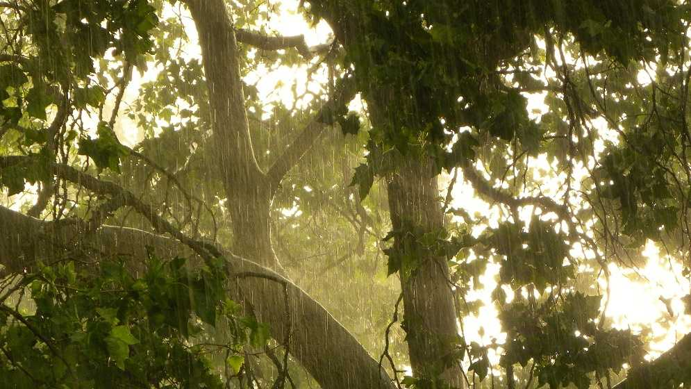 The sun peaks through the trees while rain pours down in East Sacramento this week. Upload your weather photos here.