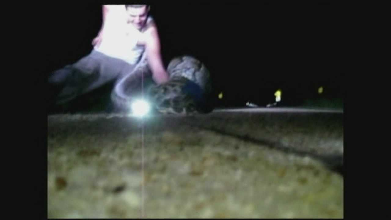 Video shows capture of record-setting python