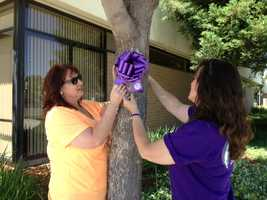 The purple bows  were put up in front of the Vacaville Police Department, Vacaville City Hall, the downtown square and on Emira Road, where Johnson's body was found. (May 24, 2013)